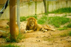 Korea zoo
