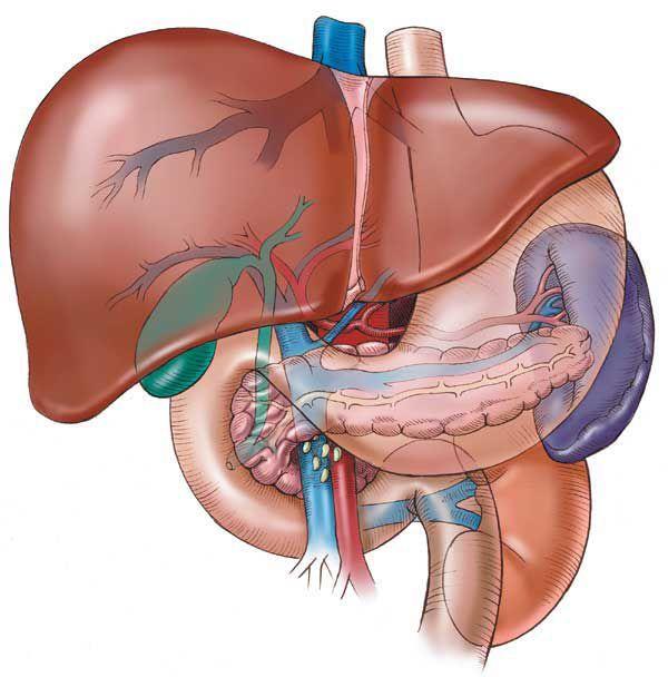 Korea liver cancer